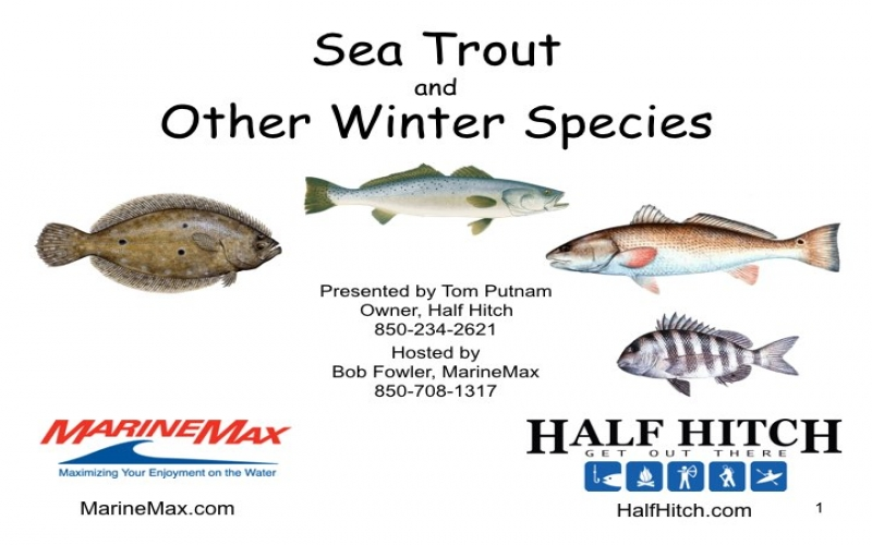 Sea Trout & Other Winter Species