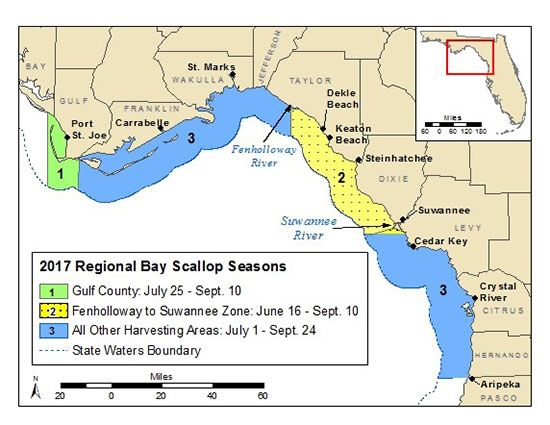 Gulf County scallop season postponed due to naturally occurring algae bloom